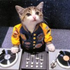 kitten_dj